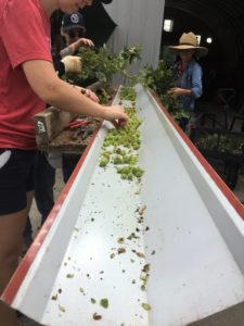 Image of volunteers sorting buds