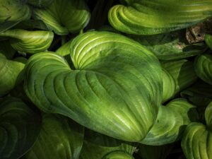 A detail shot of a leafy green plant in the court of North Carolina. photo by Marc Hall